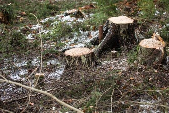 Kiri | Mis kaitseb meid, kui mets on maha raiutud?