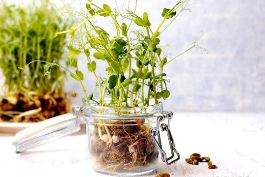 Aknalaualt potti – söö targalt ja tervislikult! Kuidas seda teha?