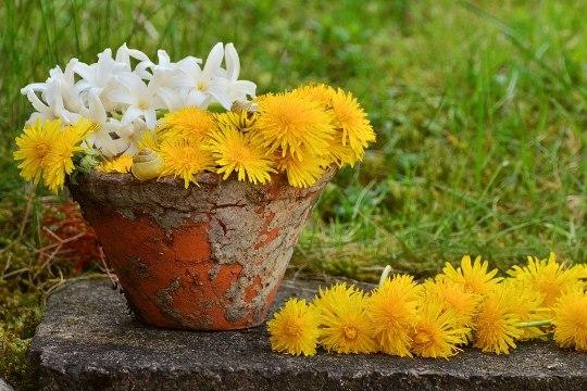 3 nippi, kuidas lillepotid puhtaks saada!