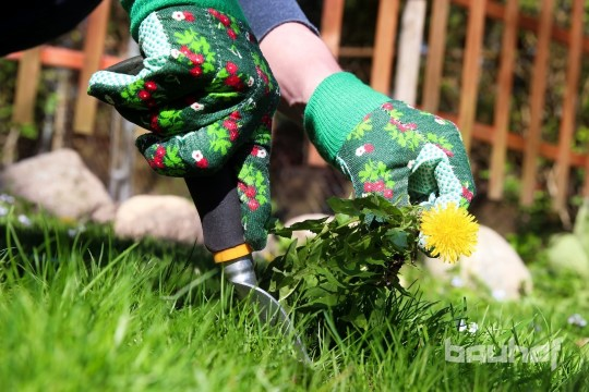 Muru hooldamise põhitõed – kuidas teha nii, et sinu aed oleks kaunis?