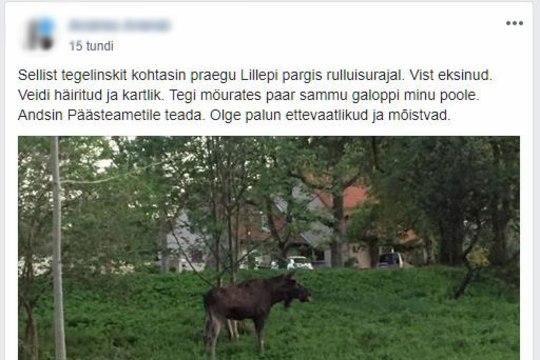 По Таллинну разгуливает лось