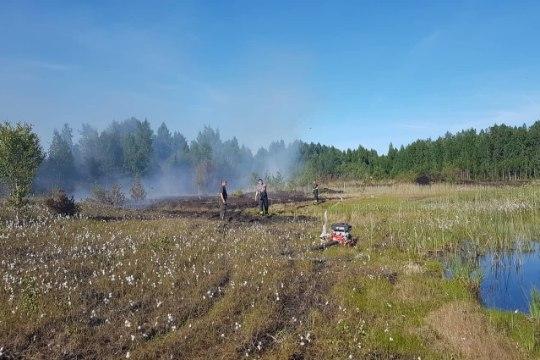 Metsad ja rabad põlevad: põua tõttu puhkesid üle Eesti kümned tulekahjud