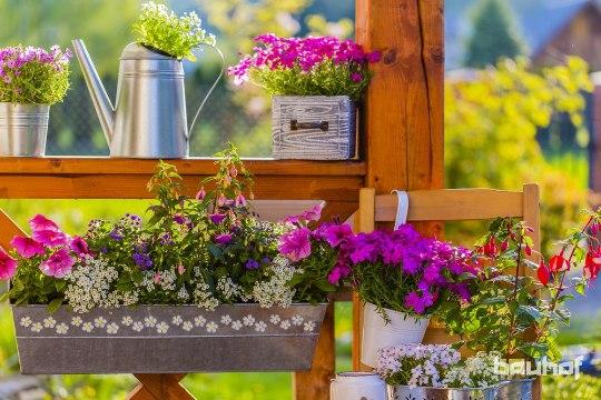 ROHENÄPU UNISTUS: kuidas kasvatada taimi väikesel pinnal?