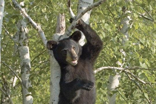 HOPP! Vaata, kuidas väike poiss ja karu üksteise võidu hüppavad