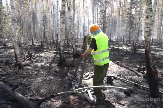 TV3 VIDEO   Vikipalu metsatulekahju on kestnud pea nädal aega: milline on hetkeolukord?