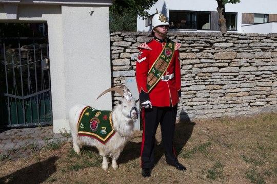 PILTUUDIS   Walesi rügemendi kits kandis Briti kübarapeol paraadvormi