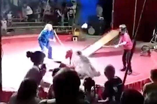 ВИДЕО: под Волгоградом медведь напал на дрессировщика во время выступления в цирке