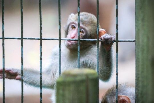 Seisukoht   Inimesed, õppige loomaaias käituma!