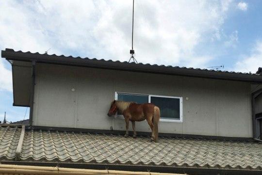 PILTUUDIS | Jaapanis leiti katusele sattunud poni