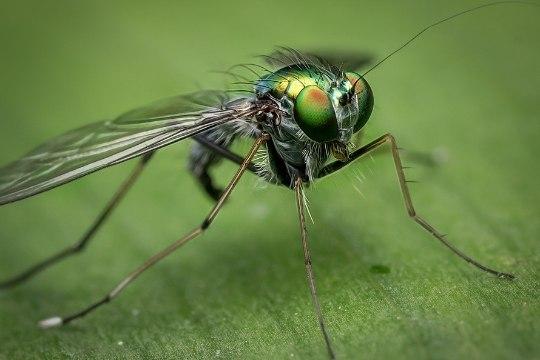Head nõuanded, kuidas leevendada putukahammustust