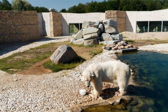 Смотри, как в Таллиннском зоопарке отметили День мороженого