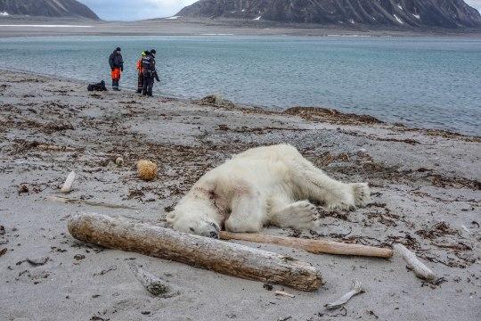 OOTAMATU VAHEJUHTUM: Teravmägedel ründas jääkaru ristluslaeva meeskonnaliiget