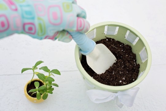 BLOGI | Millisesse potti istutada taimed?