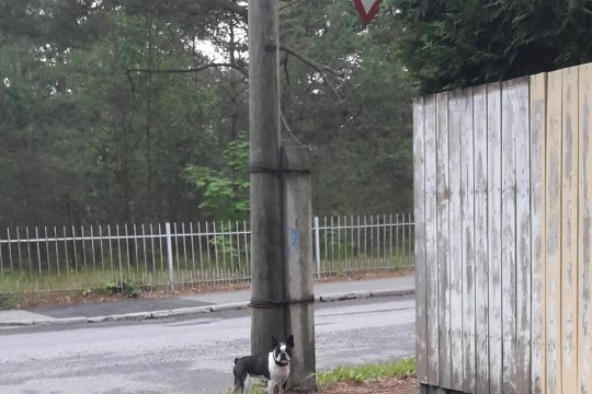 Nõmmekaid pahandab haridusministri vabakäigul koer