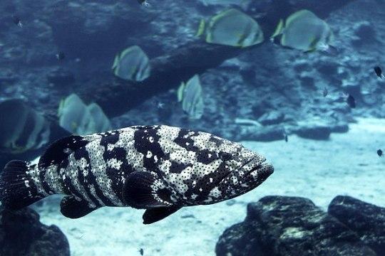 Belize'i vaatamisväärsus eemaldati ohustatud paikade nimistust