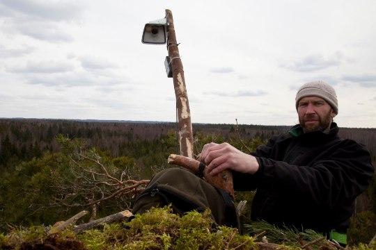 Как в Эстонии наблюдают за редкими птицами и какая от этого польза?