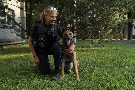 ÕL TV    Vaata, kuidas patrullkoer Willy hoiab Pärnus korda