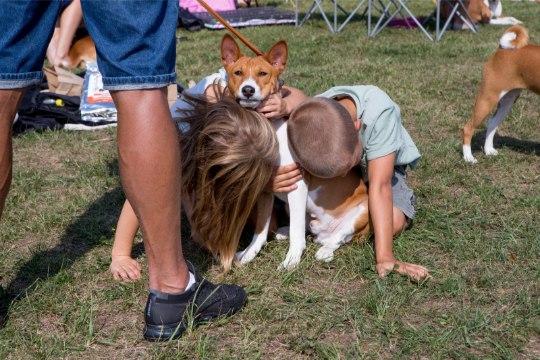 Эти безумно милые и самые преданные друзья: в Кийли проходит международная выставка собак
