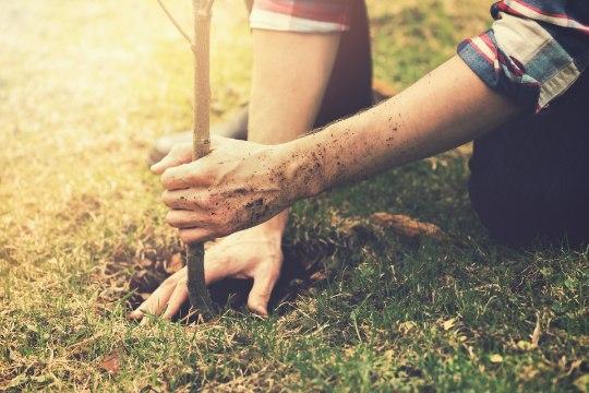 Pühendunud hindu on istutanud alates 1979. aastat iga päev ühe puu