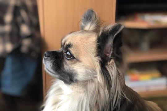 GALERII   Õhtulehe lugejate koerad panevad sulama ka kõige külmema südame!