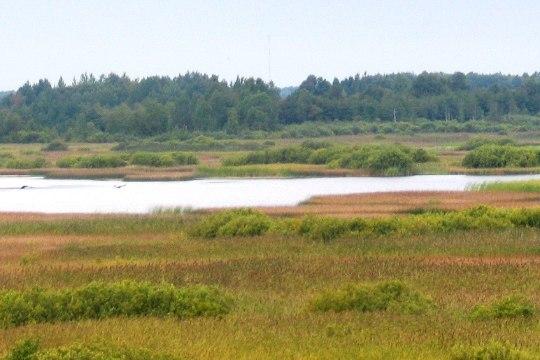 Kuumalaine kuivatas järved ja tappis vee-elustiku
