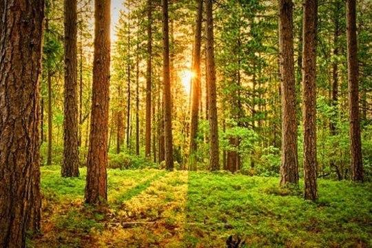 Puust ja punaseks – kuidas eraisikuna oma põllu- või metsamaast kõige enam kasu lõigata?
