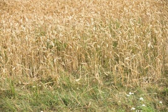 Põllumehed: järgmine aasta tuleb veel raskem