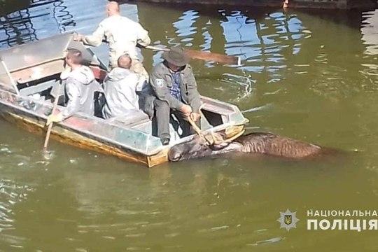 Чернобыльский лось свалился в радиоактивное озеро (ВИДЕО)