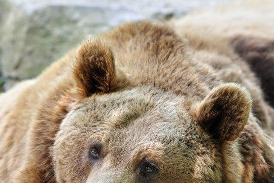 TÕELISELT VINGE: vaata karu reaktsiooni abielluvale paarikesele