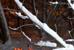 Külmapoisid kimbutavad: kuidas külmakahjustustest pääseda?