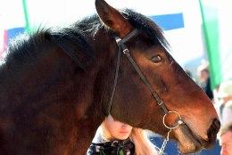 Downi sündroomiga tütarlaps saab Lastefondi abiga ratsutamisteraapiat