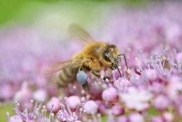 Üks küsimus: kuidas ennetada mesilaste mürgitorkeid?