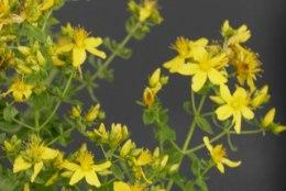 Millised taimed aitavad naisi kõige enam?