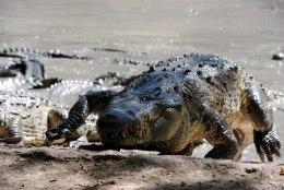 Tuneesiast leiti jäänused krokodillist, mis oli suur nagu buss