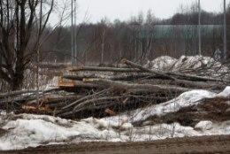 Erametsaliit: küttepuidu kasutamine Narva elektrijaamades aitab parandada tööhõivet ja elavdada majandust