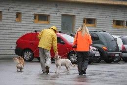 Kohtuvaidlus sai läbi – hüljatud kassid ja koerad pääsevad uude hoiupaika