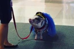 VIDEO | Nunnu minisiga rahustab lennujaamas närvilisi reisijaid