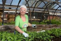 Kasvuhoone ootab tõhusat kasimist