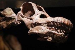 ASTEROID PANI VIIMASE PÕNTSU: dinosaurused olid hakanud välja surema juba enne suurt katastroofi