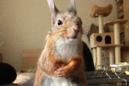 OH KUI NUNNU!   Instagramis lööb laineid päästetud oravapreili