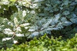 Varjulises aianurgas loovad efekti kirjulehised taimed