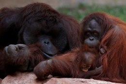 Loomaaed tegi ahvidele Tinderi