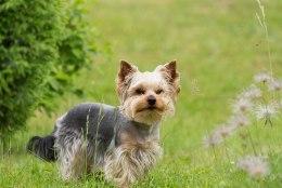 Kuidas oma lemmiklooma puukide eest kaitsta?