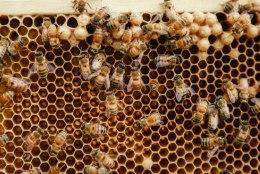 Vakra räägib linnamesilaste pidamise kohta mesijuttu