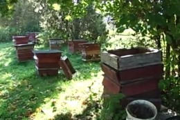TV3 VIDEO | Karud korraldasid Kuusalu kandis mesilastarudele rüüsteretke