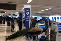 Lohutuspaabulinnuga reisijat ei lubatud lennukisse