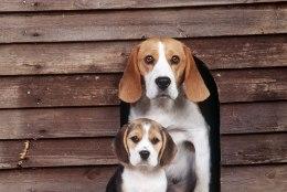 Appi, mu koer on kadunud ehk Kas tõesti võtavad vargad koduhoovidest lemmikuid kaasa?