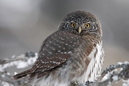 FOTOD   Haruldase linnu pesitsusala raiuti lagedaks, keskkonnaameti sõnul see linde ei ohusta