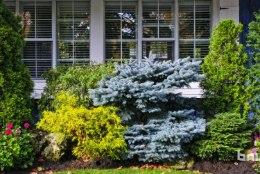Millised okaspuud on parim valik koduaeda?