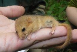 Kus on pähklinäpp?! Loomasõbrad otsivad Eesti metsades haruldast unilast